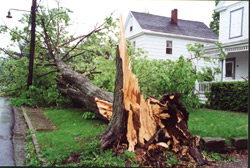 storms_minimizing_tree1.jpg