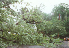 storms_minimizing_tree2.jpg