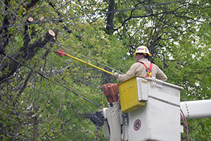 A worker removing tree limbs